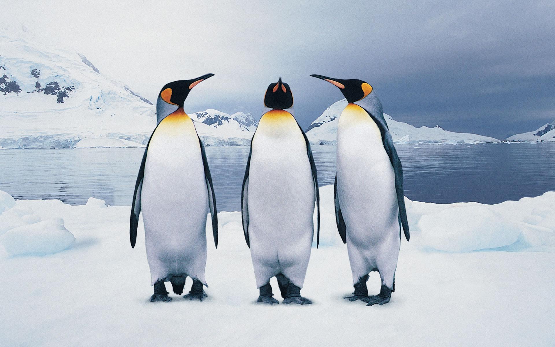3-funny-penguins